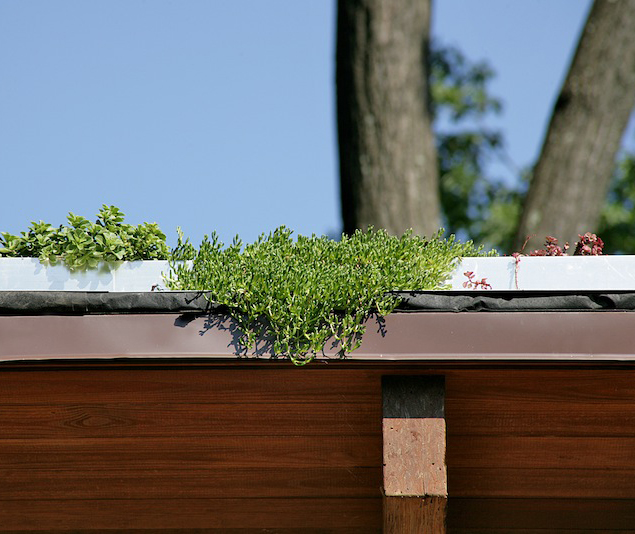 close up of a green roof